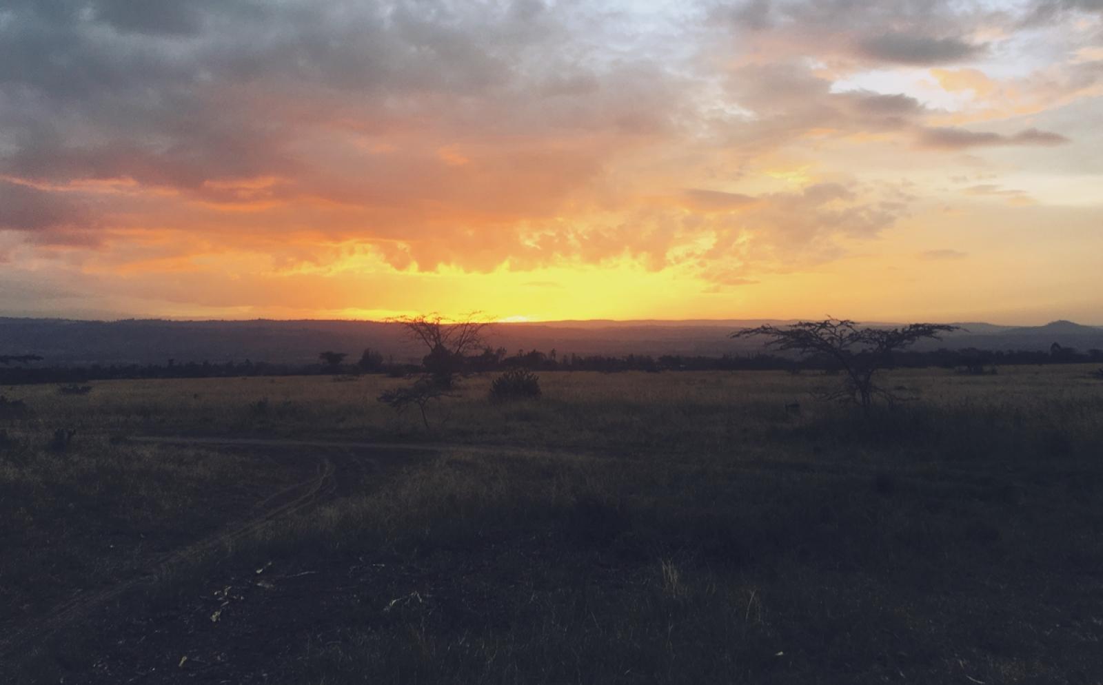 ケニアでアフリカ東部サバンナ環境保護ボランティア中の土居明美咲さんが見た景色